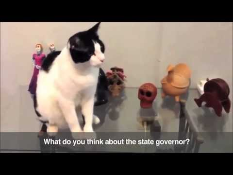 Cat runs for town mayor: Here