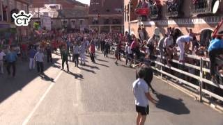 Toro de la Feria -  Medina del Campo 2014