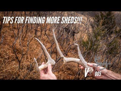 TIPS FOR FINDING MORE DEER SHEDS