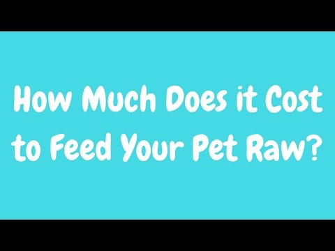 How Much Does it Cost to Feed Pets a Raw Diet?