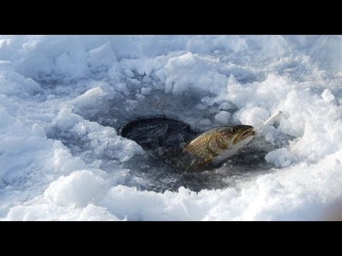 Basic tips for ice fishing