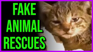 "Fake Animal ""Rescue"" Channels..."