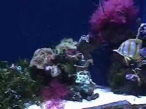 Fish at Long Beach Aquarium
