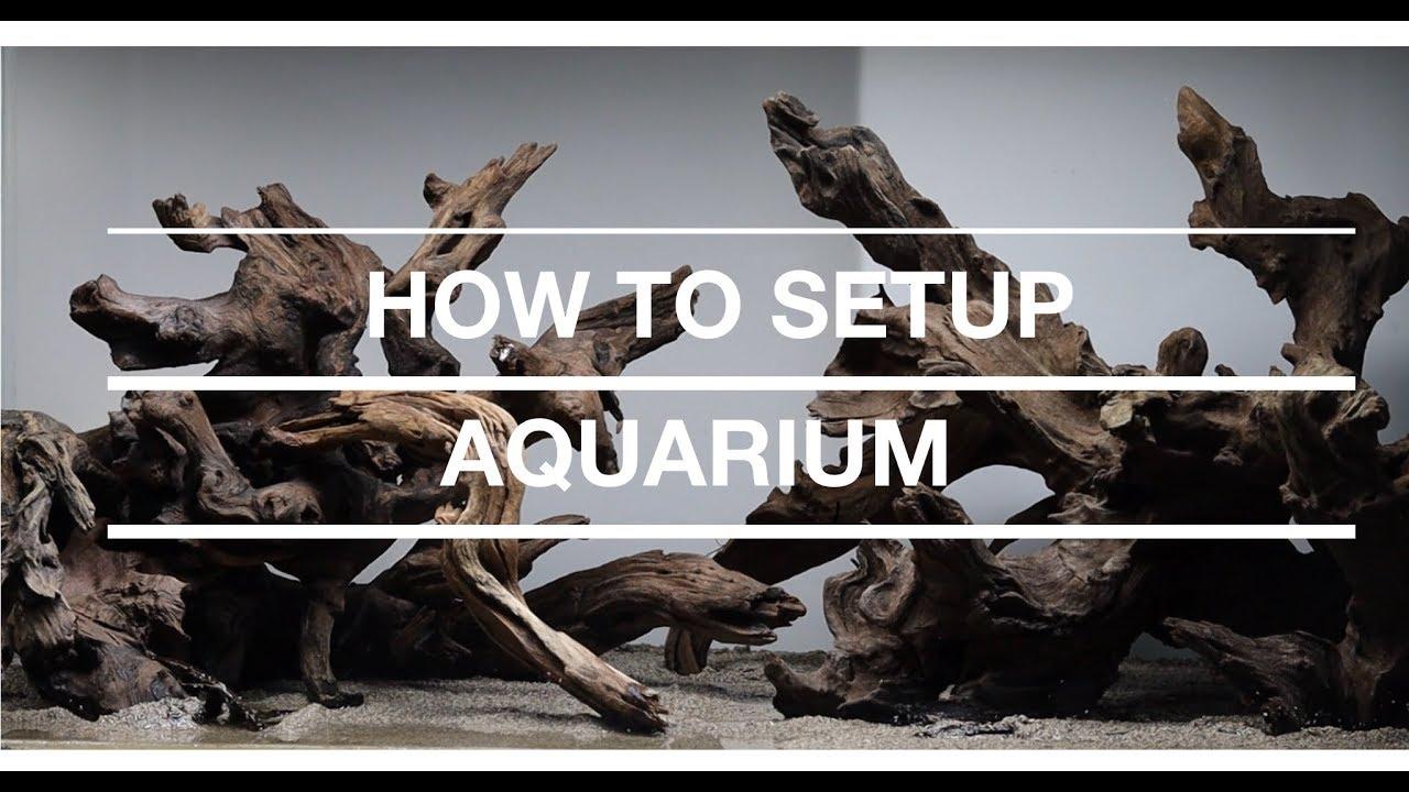 #03 Step by Step Aquascaping Tutorial (120L) - YouTube