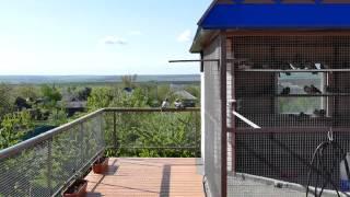 Николаевские голуби Лихая Весна 2015