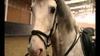 Лошади. Детям про лошадей  - По секрету часть 2(Кузнечное дело. В этом познавательном ролике дети узнают немного про лошадей. Другие интересности для ребе..., 2012-10-13T00:37:11.000Z)