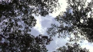Relaxing Nature Landscapes, Sky and Trees with Native American Flute
