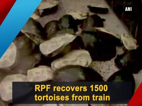 RPF recovers 1500 tortoises from train  - ANI #News
