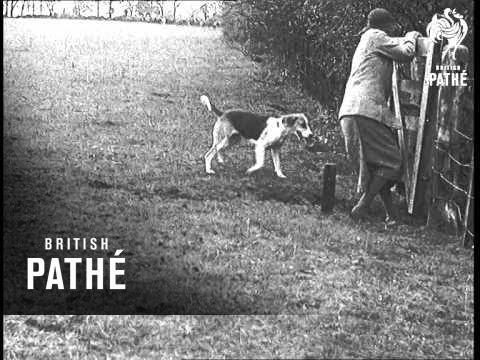 Foxhunting Season Opens Aka Fox Hunting Season Opens (1935)