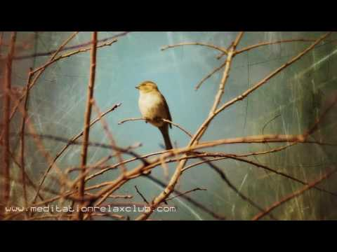 8 HOURS Bird Sounds and Relaxation Music for Inner Peace, Meditation and Yoga