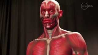 Forget the medical books and cadavers meet Anatomical man!