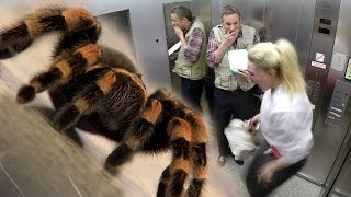 Elevator Spider Prank - S1 E02 - iPad Magic with Simon Pierro