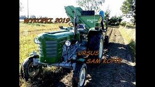 Wykopki ziemniaków 2019 -Ursus C 4011 z kombajnem Hassia - Ciągnik co sam jeździ