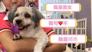 寵物美容院 當一日店長 幫狗狗造型【任務難不難】| Cheryl謹荑
