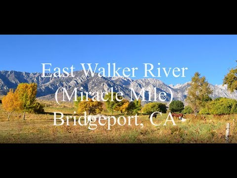 Fly Fishing The East Walker River (The Miracle Mile) Bridgeport CA