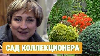 Сад коллекционных растений; растения для сада; декоративные растения для сада