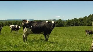 07/30/19 The 2019 Vermont Dairy Farm of the Year on 'Across The Fence'