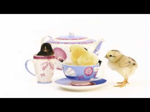 Ballet performance by baby chickens in Swan Lake teaset