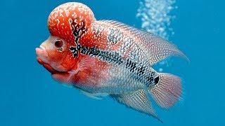 Необычайные аквариумные рыбки.