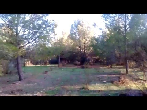 VLOG. Visita a un pinar durante la carrera. Pine forest