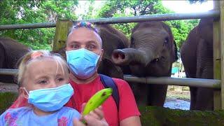 Купили МНОГО ЕДЫ чтобы УВИДЕТЬ  @ОПУ слона на КАРАНТИНЕ