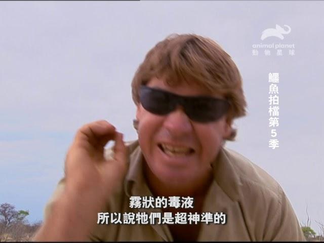 《鱷魚拍檔第5季》 2月24日起,每週日晚間9點