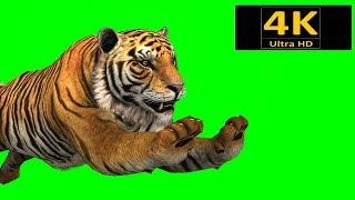 free green screen, animals, tiger, chroma key, 3d animation, 4K, hd