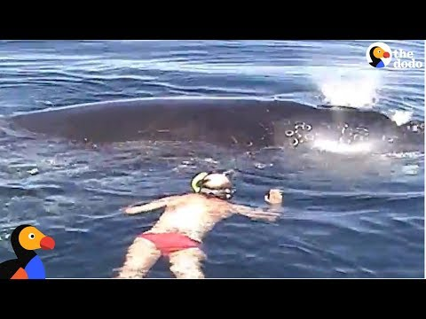 Family Rescues Whale Tangled In Net  | The Dodo