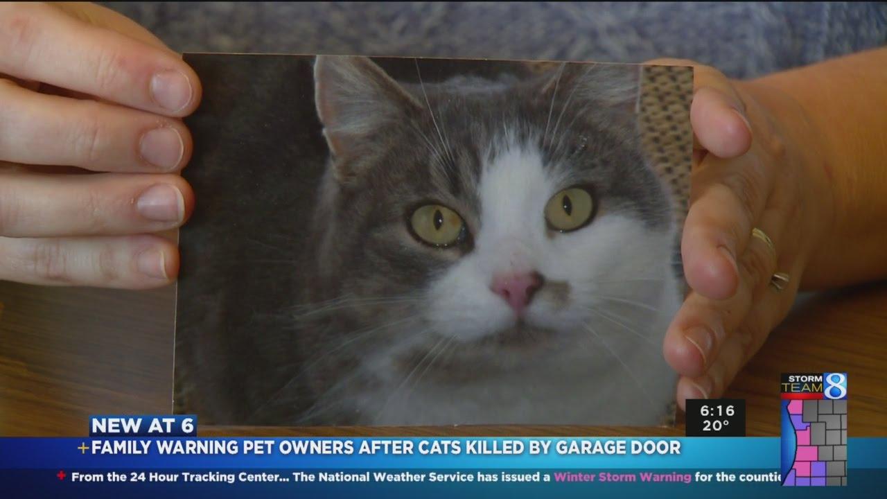 Garage Door Kills Cats Owners Warn Others Youtube