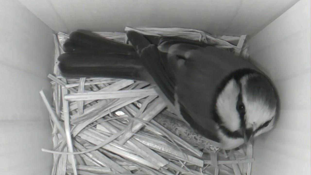 ZoneMinder and Raspberry Pi Zero birdcam (update) – Marcel Claassen