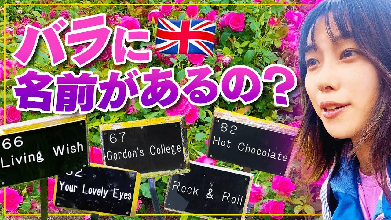 【イングリッシュガーデン】バラだらけの公園を散策!