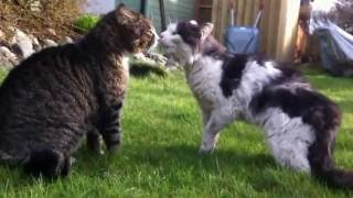 Unbelievable Cat Fight HD 1080P