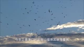 20161012灰面鵟鷹過境滿州