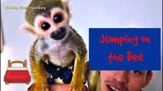 Baby Monkey oLLie Jumping on the Bed