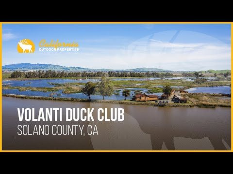 Bay Area Treasure | The Volanti Duck Club