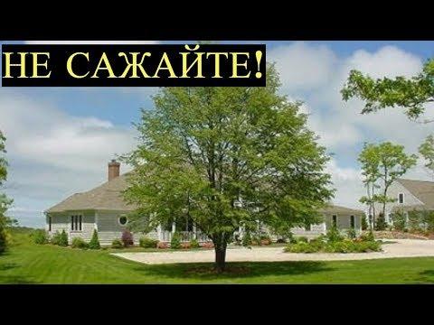 Какие деревья Нельзя сажать рядом со своим Домом