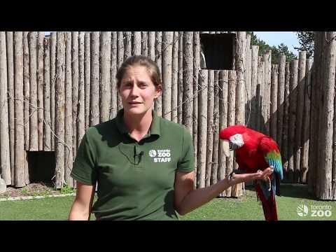 Toronto Zoo Bird Ambassador Wild Encounter!