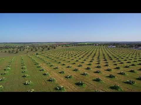 Pomares da Agrofiap