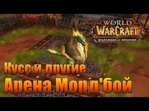 World Of Warcraft. Арена Морд'бой.  Кусс и другие.