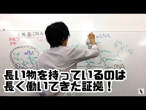 高校 生物 原核生物の転写と翻訳 字幕あり