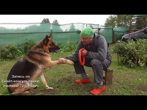 Как приучить собаку дать лапу