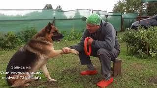 Как научить собаку давать лапу.