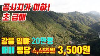 강원도 강릉 도로접 임야 저렴한 매매/투자용/임업용/종…