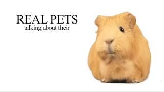 Cute talking Animals in their homes