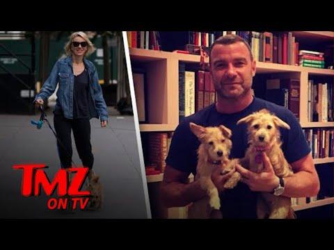 Naomi Watts & Liev Schreiber Adopt Hurricane Harvey Rescue Dogs | TMZ TV