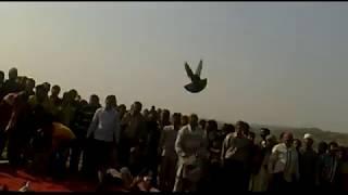 akbar ustad delhi, talim ustad chiku, dada ustad nawab sahib,