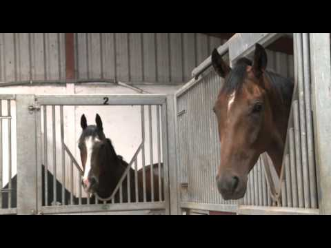 Racing Explained - What Makes A Good Racehorse?