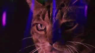 Кошачья дискотека