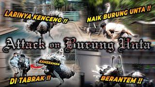 RUSUH BURUNG UNTA DI LEPAS !! KAMERAMEN SAMPE KETABRAK & ALSHAD COBA NUNGGANG BURUNG UNTA !!