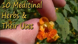 10 Medicinal Plants & Their Uses